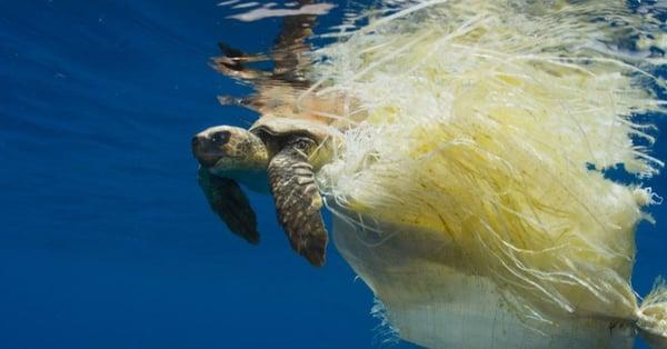 blue planet turtle plastic